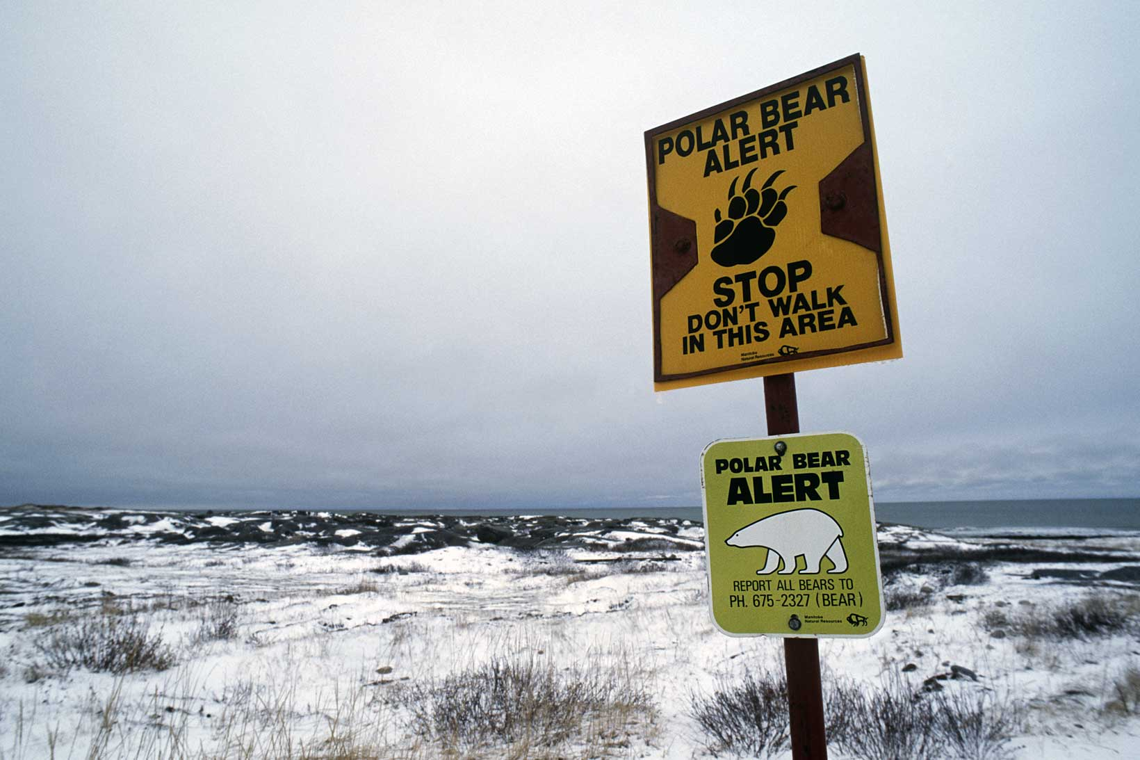 Polar bear alert sign