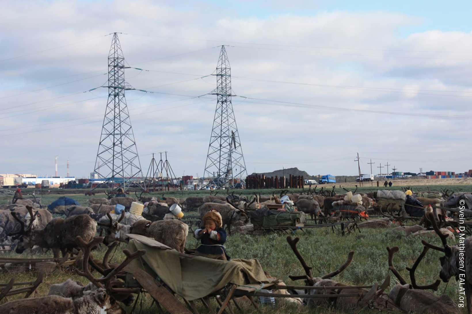 Nenets reindeer herders alongside modern industry.