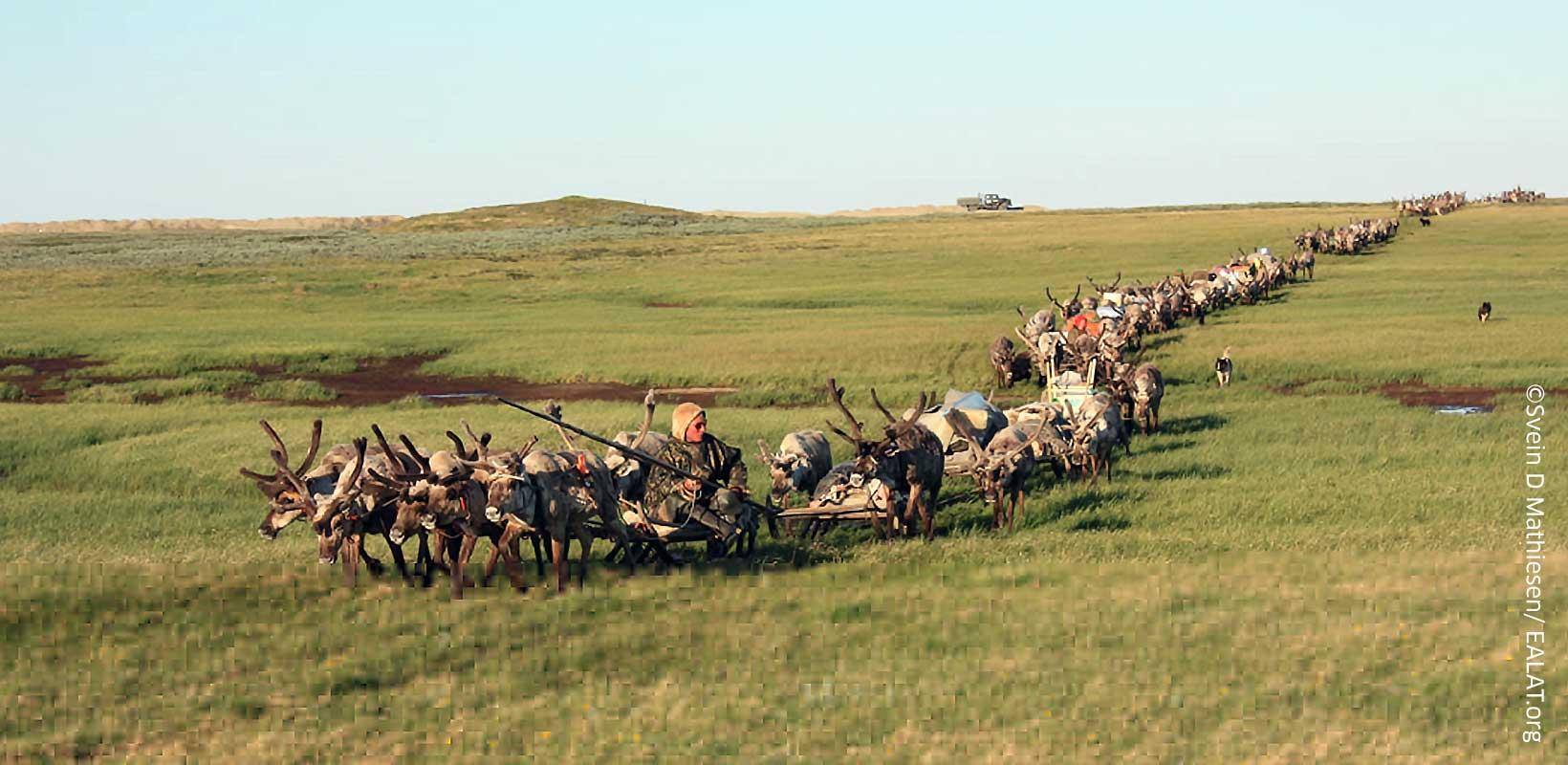 Nenet migration route