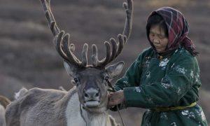 Tsaatan woman with reindeer